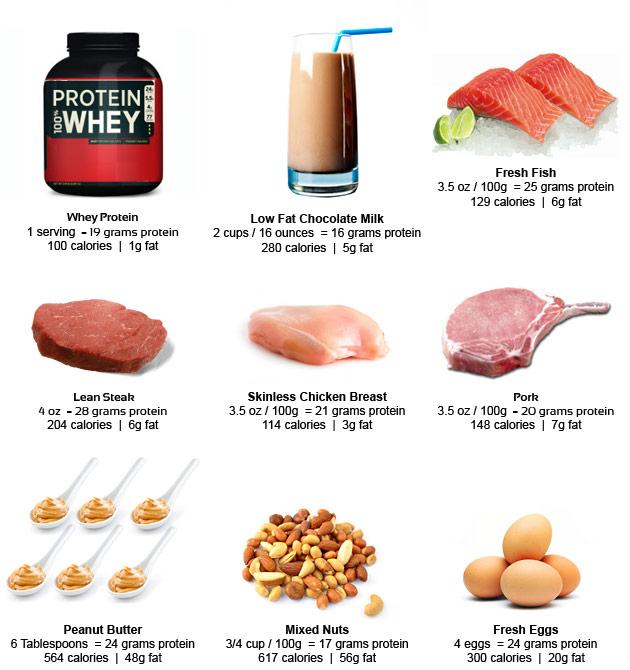proteine voeding